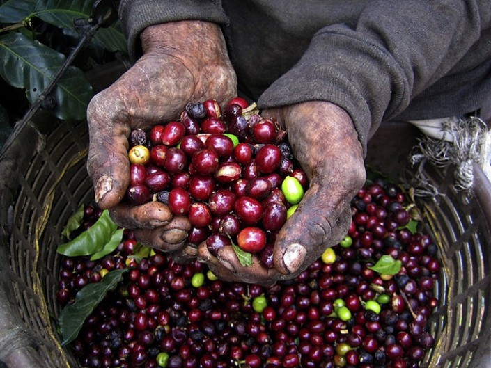 Nicaragua Beans Lillo Caffe